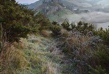 Our Dorset
