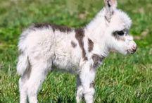 Hee Haw! / Donkeys