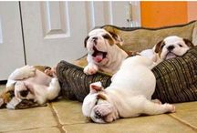 Puppies And Dogs Funny