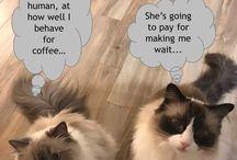 Coffee critters / #coffee #cat #coffeecat #coffeedog #dog #thequeenbean #animalpics