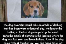 Advice: Find UR Lost Dog