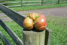 CSA and Home Gardening / recipes, gardening tips, and more inspired by our own organic and biodynamic Sankanac CSA