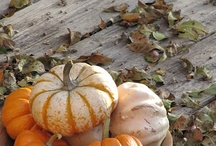 Fall / The most beautiful time of the year.  / by Pine Cones and Acorns Blog