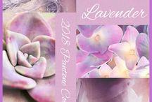 LavenderPink