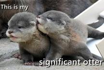 Otter <3 / by Brittany Wolken