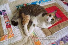 Pupa - Cat /  #cats #cute #funny #kitties