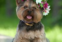 Animal cutest