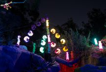 L.A. Zoo Lights 2015 / by Los Angeles Zoo
