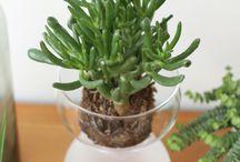 plants and flowers #blogstlove / Hier sammeln die Blogger des BLOGST Netzwerks Ideen zum Thema Pflanzen. Die BLOGST Blogger pinnen hier alles was bei ihnen auf dem Blog grünt, blüht und gedeiht. Lasst Euch inspirieren!