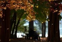 HollandseKids Herfst