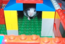nice house for the little one