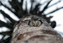 Owls , Uilen / een liefde voor uilen
