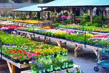 Grocery Stores & Gardens