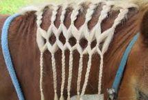 Vlechten paard