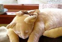 Кошачья подушка