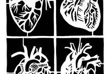 anatomy / by Lauren Dixon