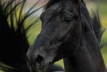 I love horse :D
