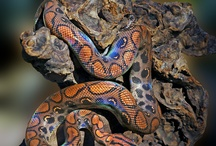 Serpents :D!
