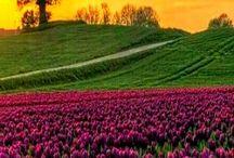 Çiçek tarlasi