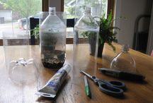 Ecosistem într-o sticla