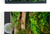 MOSS ART by Art Botanica / Beautiful Moss Wall Art created by Art Botanica. No maintenance, no care, forever green and vibrant!