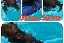 Swim with Sloths