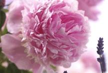 { in the garden }