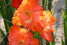 Kvety-pestovanie