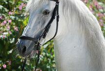 Polish ancient horse