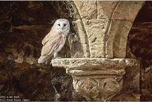 Alan M Hunt paintings.