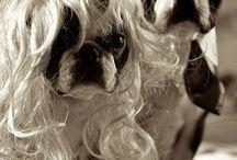 söpöt koirat