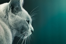 Animal Love / Beautiful animal kingdom