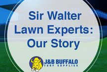 Buffalo Turf Supplies Sydney / Manufacturer of genuine Sir Walter Turf all around Australia and supplying growers in Queensland, South Australia and Victoria.