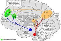 Mózg i umysł
