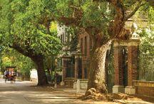 Charleston Bound / by Shelly Stacy