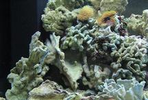500 Liter Marine Aquarium