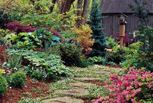 Gardening Ideas / by Nancy Stevens