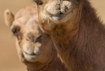 Bilder aus dem Oman