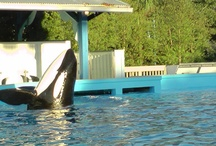 Dining with Shamu at SeaWorld / by Undercover Tourist