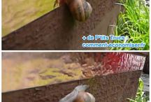 contre les escargots