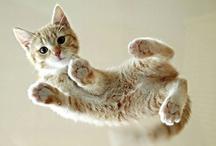 cute cute cute / by Marisa Dahlstrom