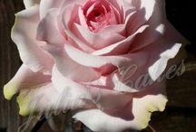 sugar rose by Julia's Cakes