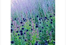 Gardens : Purple