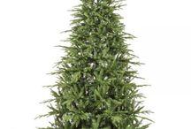 Χριστουγεννιάτικα Δέντρα 4 ΕΠΟΧΕΣ / Χριστουγεννιάτικα δέντρα όλων των ειδών και μεγεθών ,ποιοτικών προδιαγραφών για να τα χαρείτε για πολλά Χριστούγεννα . Ανακαλύψτε μέσα από τη χριστουγεννιάτικη συλλογή μας το δέντρο που θα αποτελέσει για εσάς τον κενό καμβά για να επιδείξετε το ύφος και την  δημιουργικότητα σας