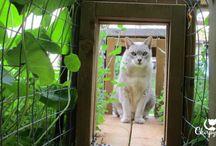 Senior cats / Where senior cats hang out