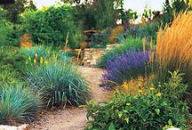 Rock/Gravel Xeric Gardens / by Alison Conliffe