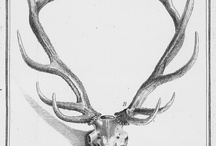 Antlers skull n whatever