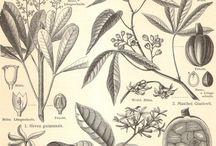 Botanical illustrations I