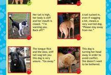 Pet Behavior