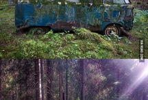 лес- чудес
